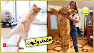 قطط مضحكة جداً - اضحك مع القطط حتي البكاء 😂 #6