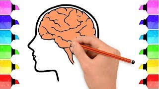 How to draw a brąin - how to draw human brain in easy steps | brain anatomy drawing