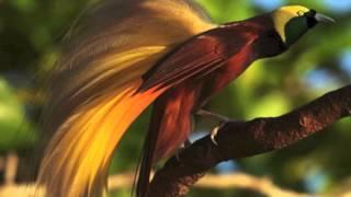 Video Syom Sandik - Biak West Papua Music download MP3, 3GP, MP4, WEBM, AVI, FLV April 2018