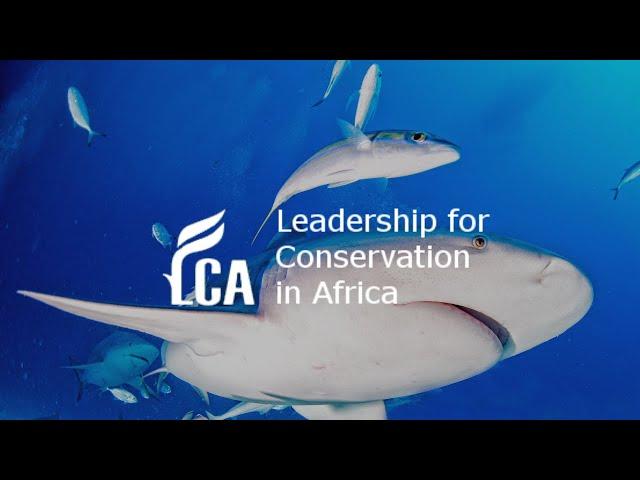 Discovering the hidden lives of Zambezi sharks (bull sharks)