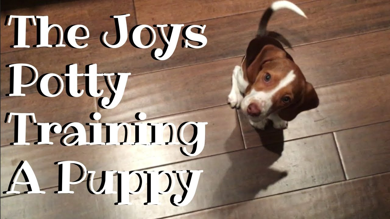 The Joys of Potty Training a Puppy
