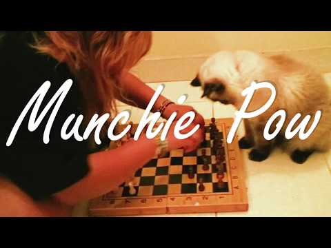 CAT PLAYING CHESS! (FUNNY)