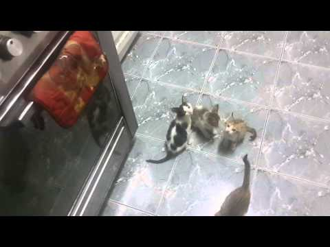 hungry kittens go crazy