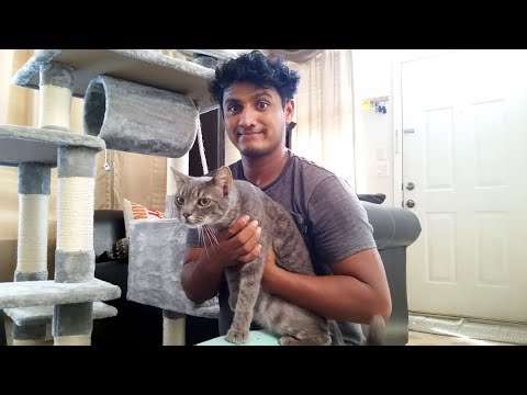 Construllendole un Castillo al Gato de Kevin by SONGMICS Cat Tree!