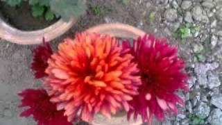 Manipuri song..kunjabihari...Nungsirabasu thamoibu kaphalli...mp4/h264