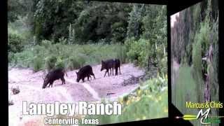 3 Legged Hog Hunt - Marcus & Chris Hunting