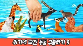 한국어ㅣ동물 구출 대작전 9화, 위기에 빠진 동물 자연으로 돌려보내기, 동물만화ㅣ꼬꼬스토이