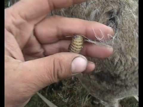 паразиты в ухе человека лечение