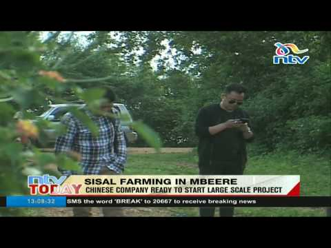 Chinese company ready to start large scale sisal farming project