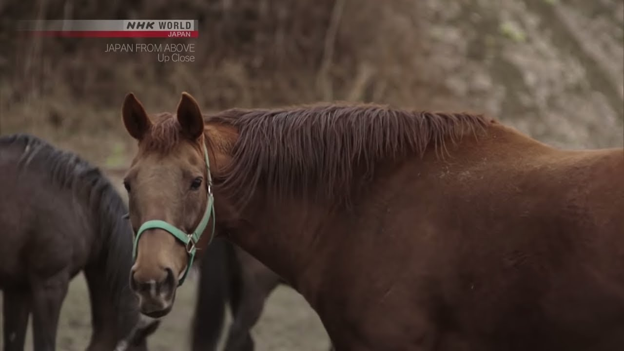 Photo of Horse Retirement Home [Hokkaido] – JAPAN FROM ABOVE: UP CLOSE – video