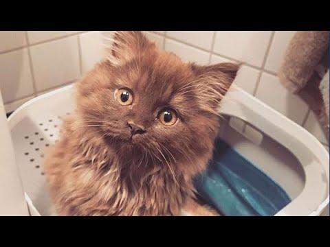 Видео: Котенка бросили при переезде на произвол судьбы, в пустом доме