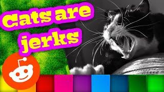 Cat Are Jerks Funny Photos Reddit Cat Divas