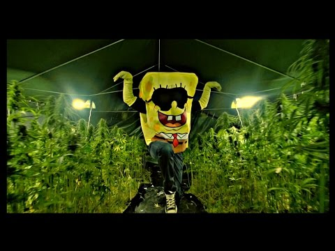SPONGEBOZZ - Planktonweed ►Planktonweed Tape 17.04.2015◄ (Official 4K Video)