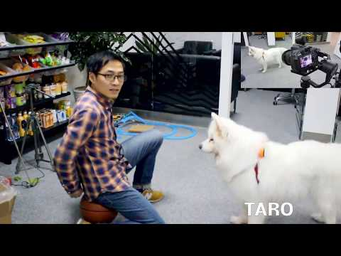 Tracking Test- Infrared Tag on This Lovely Dog (auto-tracking stabilizer)
