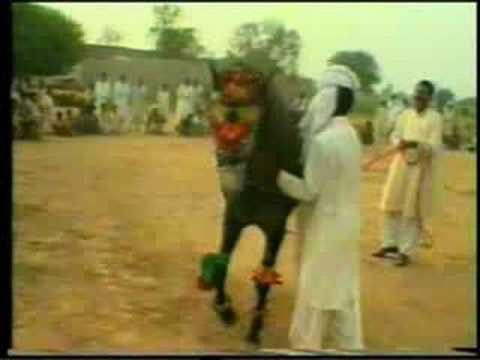 Nisar Stud Farm, Amer Nisar Khan, Neeli Ravi, Laho...