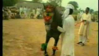 Nisar Stud Farm, Amer Nisar Khan, Neeli Ravi, Lahore, Horse Dancing in Pakistan