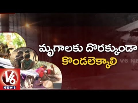 Ground Report On Tribal People Lifestyle In Khammam District | V6 News