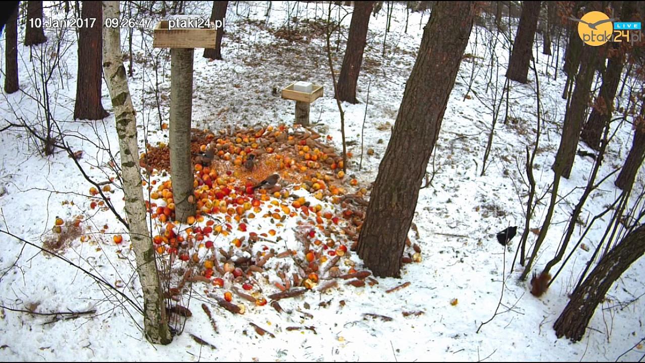 Zabawne wiewiórki w karmisku dla dzikich zwierząt w lesie