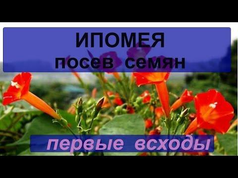 Цветок в доме