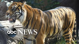 zookeeper-hospitalized-tiger-attack-topeka-zoo