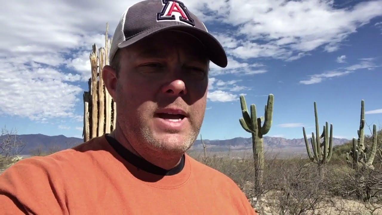 The Basics of Saguaro Cactus