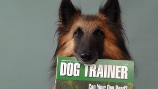 Dog  Barking  - Be Quiet  How To Stop Unwanted Behaviour -   Www.tammysdogtraining.co.uk