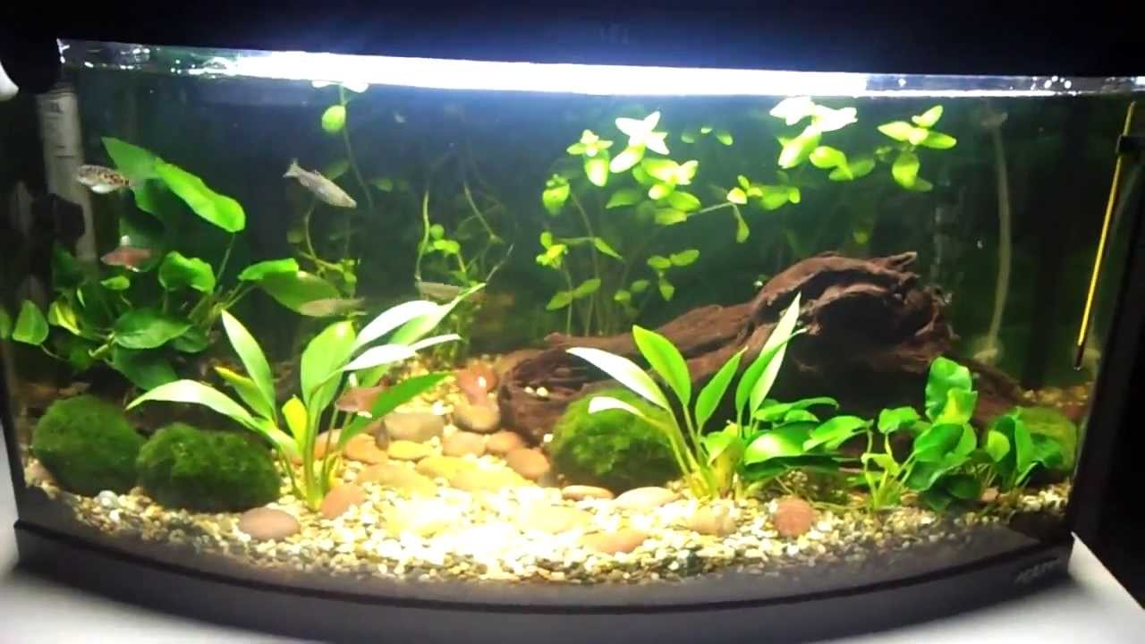 Огромный выбор аквариумов в