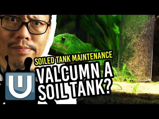 Soil Planted Tank - Maintenance and Setup Tips