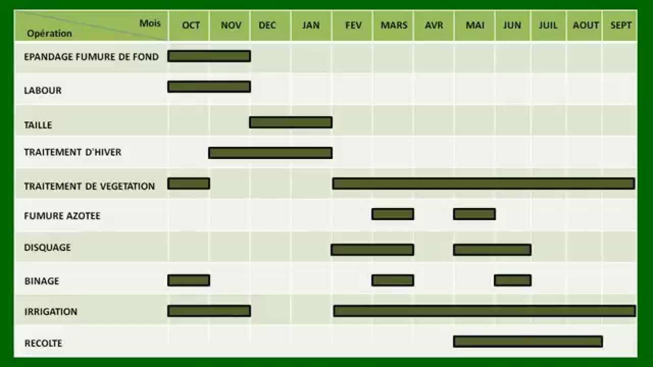Planning des travaux arbres noyaux abricotier p cher - Taille des arbres fruitiers a noyaux ...