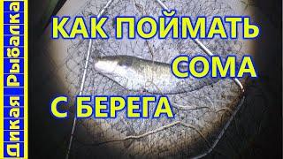 На что ловить сома с берега Рыбалка на сома с набережной Где достать наживку