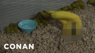 How To Prevent Banana Extinction  - CONAN on TBS