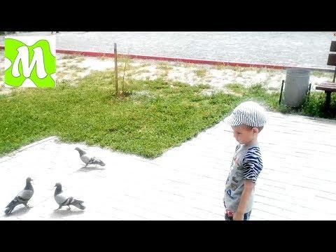 птичками игры