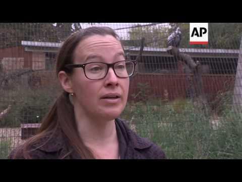 Report paints bleak picture of wildlife numbers