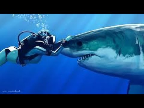 Secret Ocean - New White Sharks - Nat Geo Wild HD