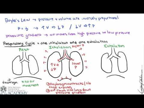 Pulmonary and Alveolar Ventilation