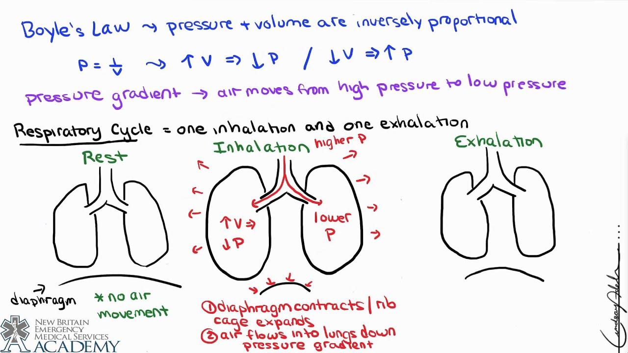 pulmonary and alveolar ventilation - youtube