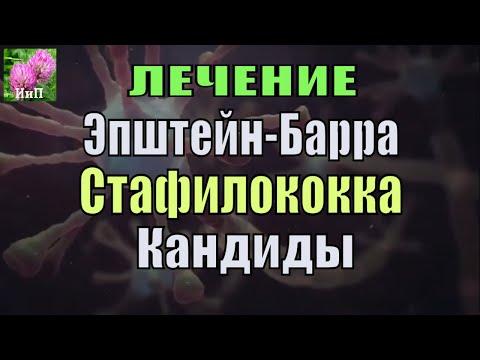 Лечение Cтафилококка (CТРЕПТОКОКК), вируса Эпштейн Барра, Кандидоза силой лечебных трав