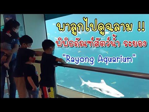 พาลูกเที่ยว | ไปดูฉลามที่พิพิธภัณฑ์สัตว์น้ำระยอง Rayong Aquarium