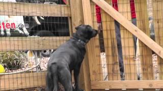 Kyle, Lab, Episode 13 (fear Aggression) - Sunl Atlanta Dog Training