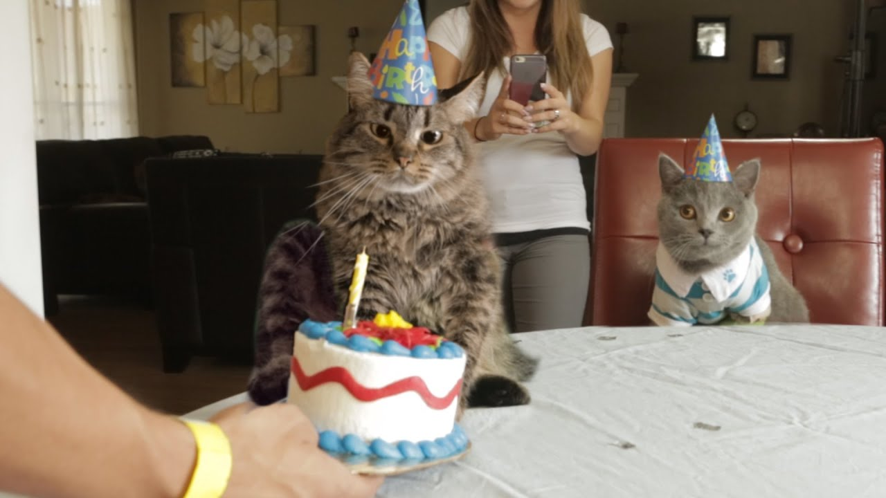 Cat In Birthday Hat Drawing