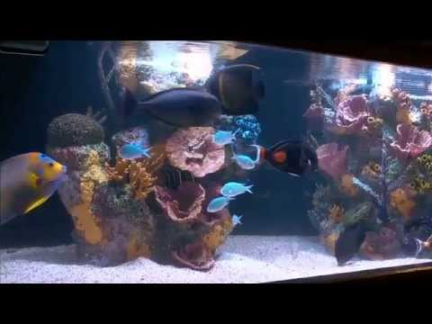 Synthetic Inserts - Wetpets & Friends - ReefKeeping Video by AmericanReef Start a Saltwater Aquarium