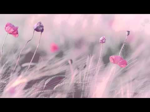 "3 HOURS Best Relaxing Music 'Romantic Piano"" Background Music for Stress Relief, Therapy, Love"