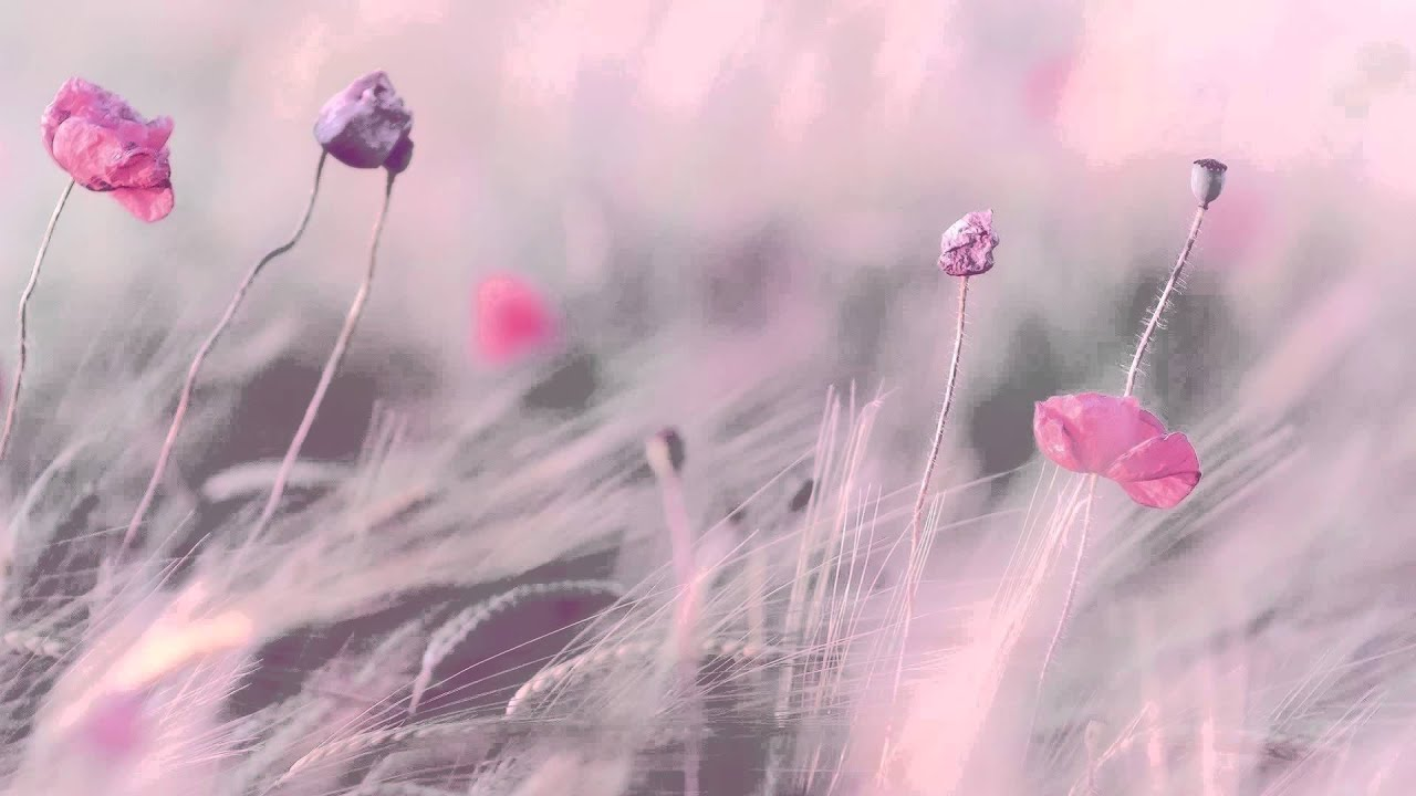 """3 HOURS Best Relaxing Music 'Romantic Piano"""" Background ..."""