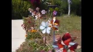 My Garden Pinwheels Spinning In The Wind (5-8-2015)