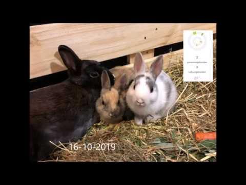 SIMABU diertjestelevisie afdeling konijnen 16-10-2019