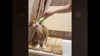Кошки тоже чистят зубы