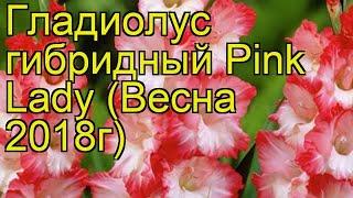 Гладиолус гибридный (Pink Lady). Краткий обзор, описание характеристик, где купить луковицы