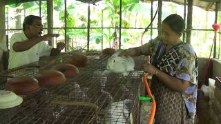 Blessing Garden Rabbit Farm(malakka,thrissur)