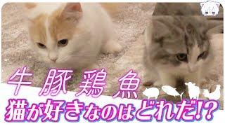 猫は何の肉が一番好きなのか検証してみた!!【子猫のいろは#3】