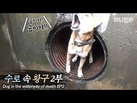 Dog with an extreme fear of strangers.. But after hearing the man's voice?